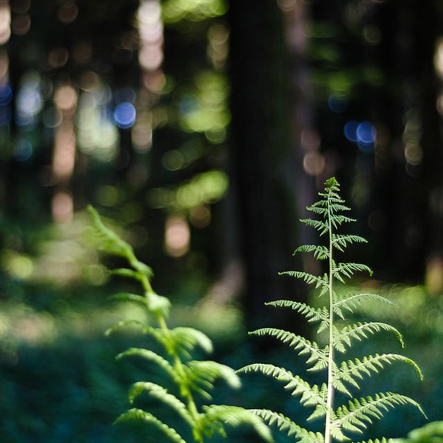 Fairytale Woodlands