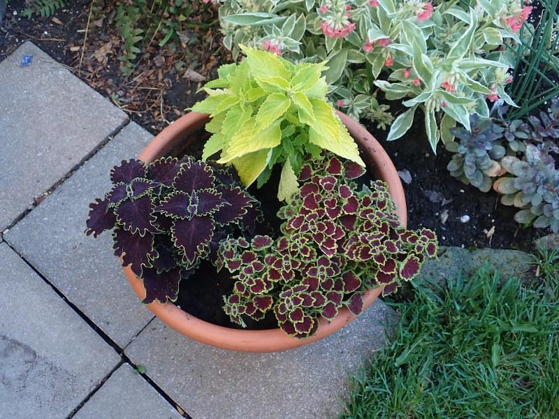 Pots et jardinières 2020 - Page 2 49919333321_8f6c43e311_c