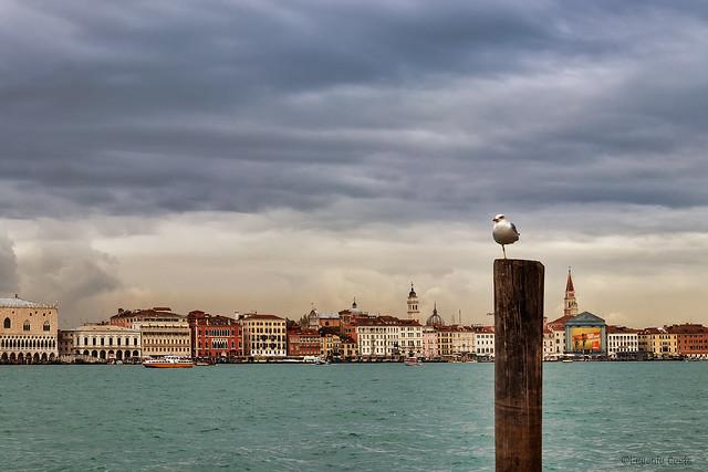 Gabbiano Jonathan a Venezia - Jonathan Seagull in Venice