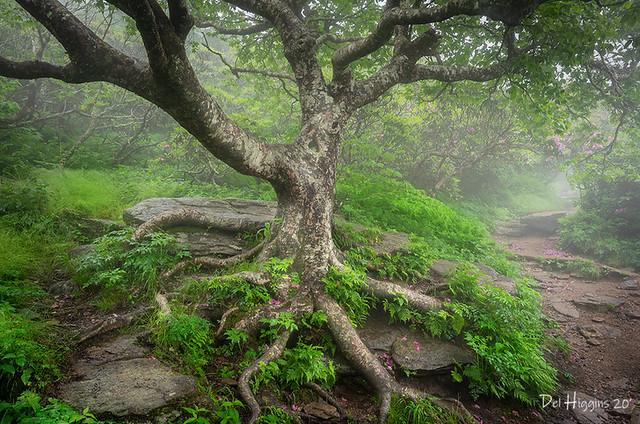 Foggy Tree & Trail