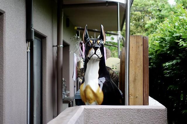 Today's Cat@2020ー05ー21