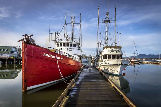 Arctic Fox II /  Nootka Lady