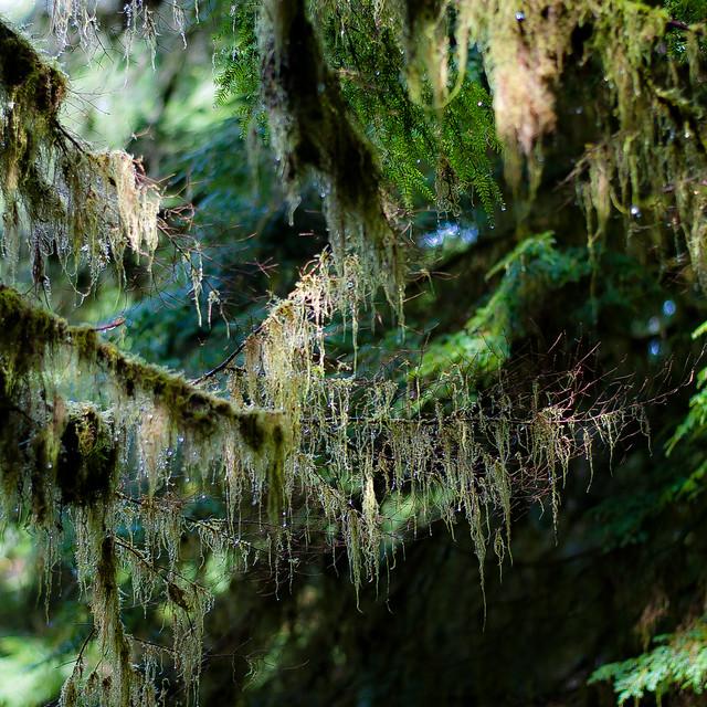 Tree Moss 013
