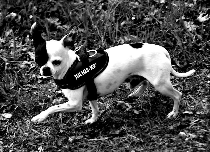 Dog 19.04 (1)