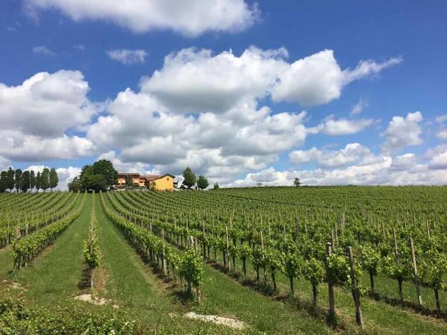 1 Treviso vinogradi
