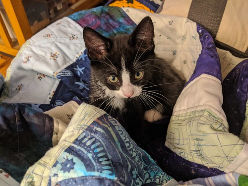 Pippin likes being close to me, and while I was hand-binding the quilt, he decided it was time to snuggle up.