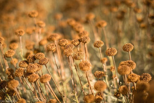 Blüten --- Blooms