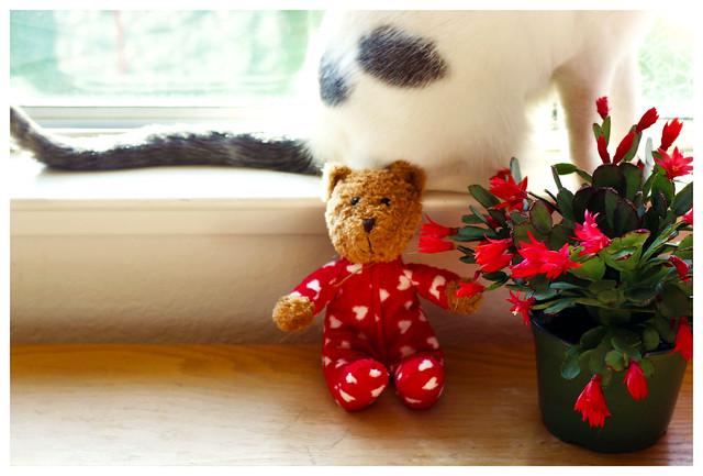 Simon and the teddy Part 1 :-)