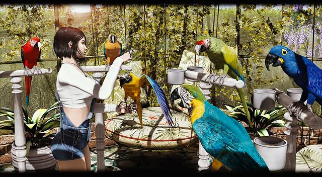 |T|L|C| - Parrots Collection
