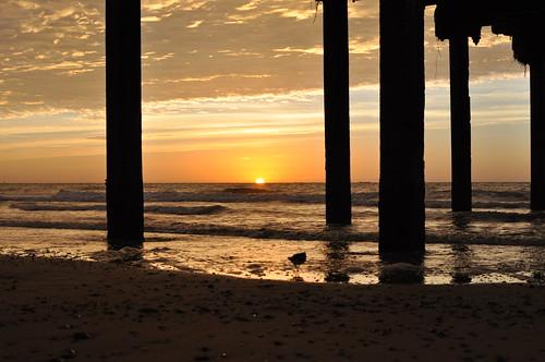 morning sunrise sea seaside seashore seascape turnstone reflection silhouette pier clouds waves beach sun