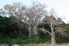 Plage des 3 Baobabs