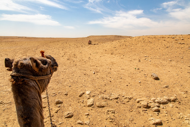 Armchair Traveling - The View From a Camel at Giza
