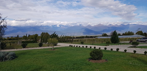 mosmieri kakheti vineyard georgia