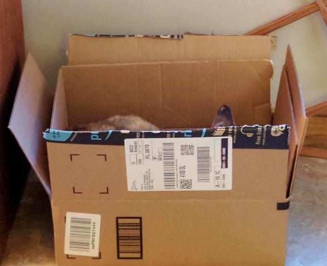 Kiwi in a Box