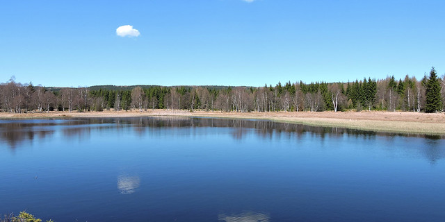2020-04-12 Forest Pond 1
