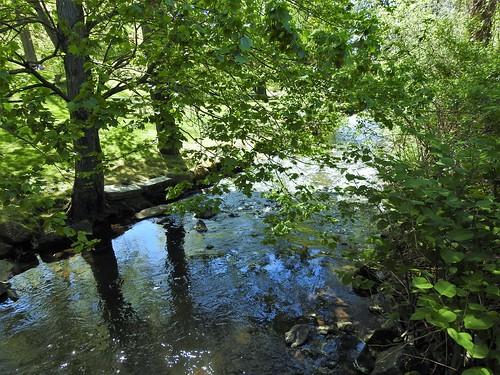 stream massachusetts janelazarz trees spring green blue water brook newengland park forestpark springfieldma