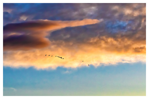 richland washington badgermountain geese birds birdsinflight