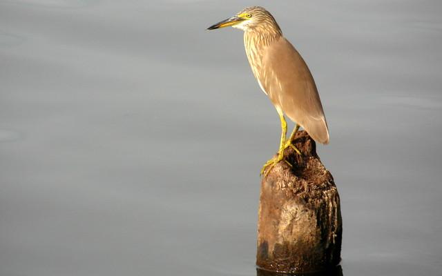 kerala backwaters guardian