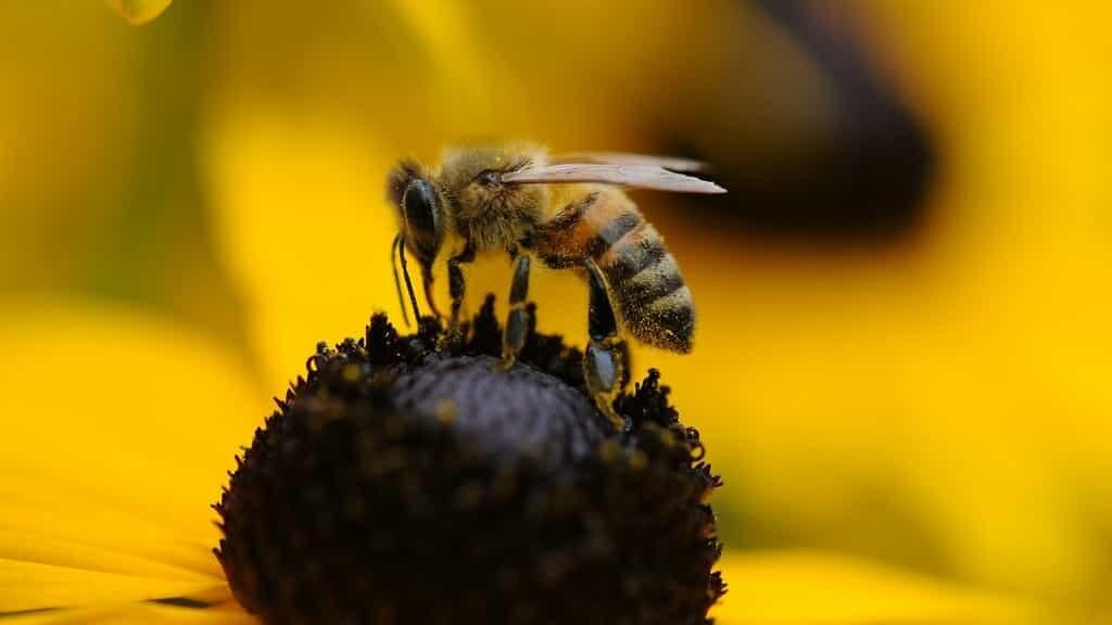 Les abeilles forcent les plantes à fleurir tôt