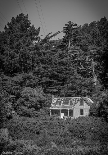 <p>Old house near the rail road track in Tawa, Wellington.  The bush has grown so much by now that a photo like this of the old place is not possible any more.</p>