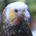 Up close and personal with a Kaka