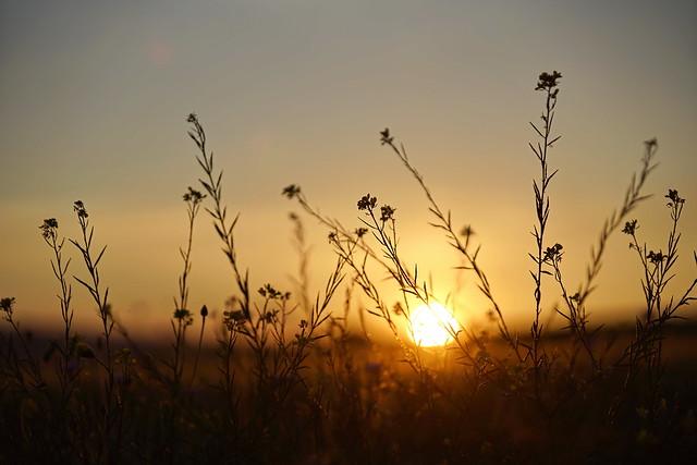 Sonnenuntergang an der Blumenwiese