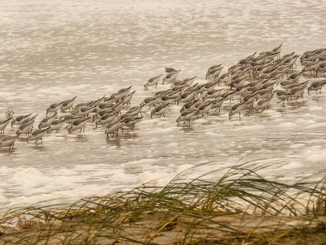 groupe-sanderling