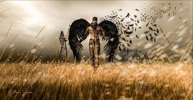 Angel N°.06