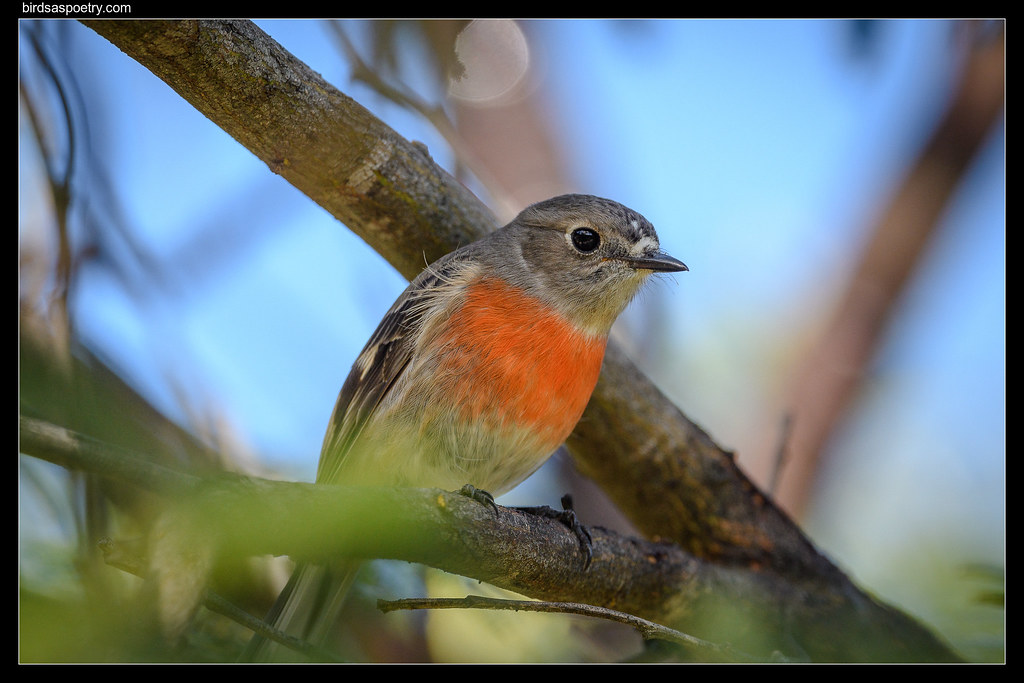 Scarlet Robin (F): Dressed for Winter