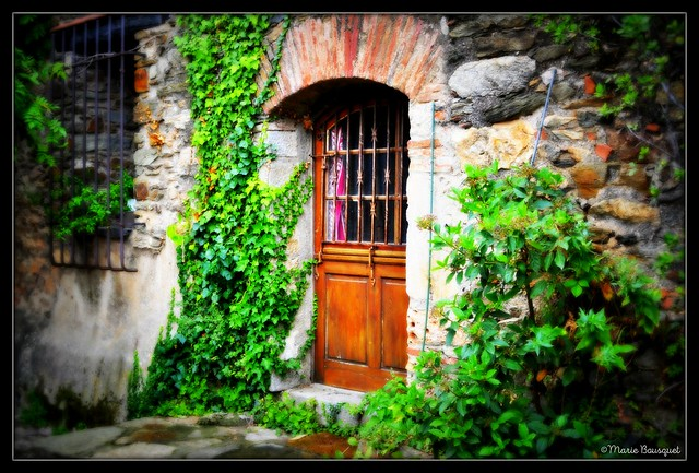 Façade au lierre à Castelnou