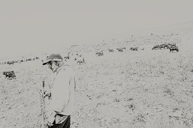 The Shepherd Works In Solitude