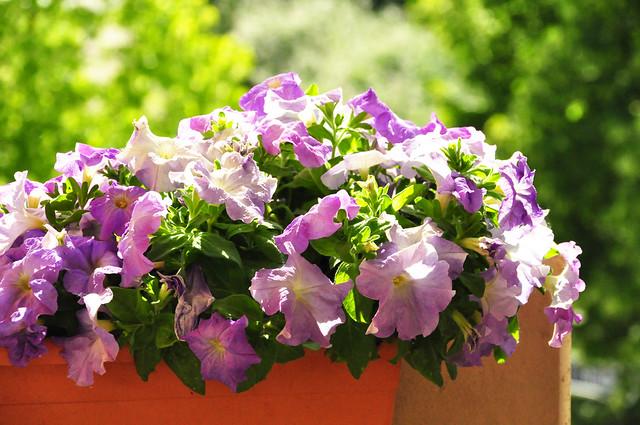 Mai 2020 ... Unser Balkon blüht in allen Farben ... Brigitte Stolle