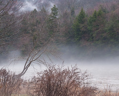 Distinctive Leaning Tree on the Clarion River (D1H)