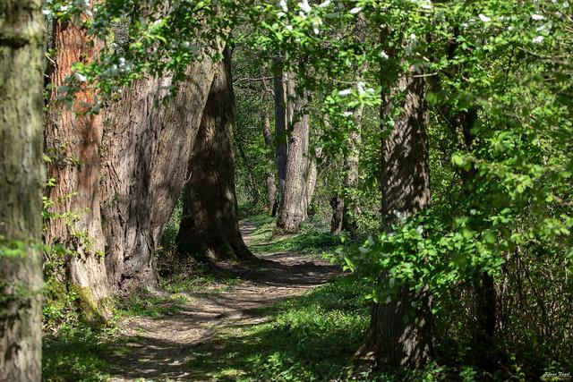 Forest path  < >  Waldweg