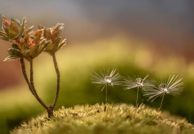 tiny world...rs-6661