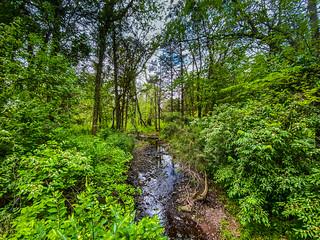 Russell Branch - Ashburn VA