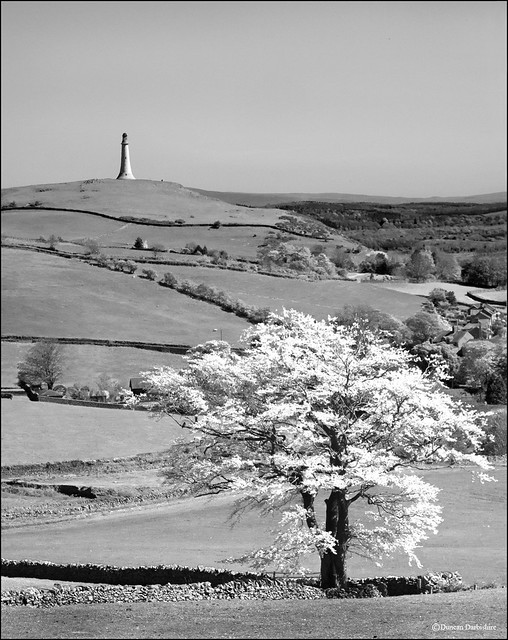 The Monument on Hoad Hill and Tree