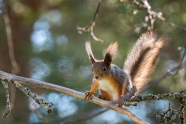 Meanwhile in Finland, the squirrels are up to something...