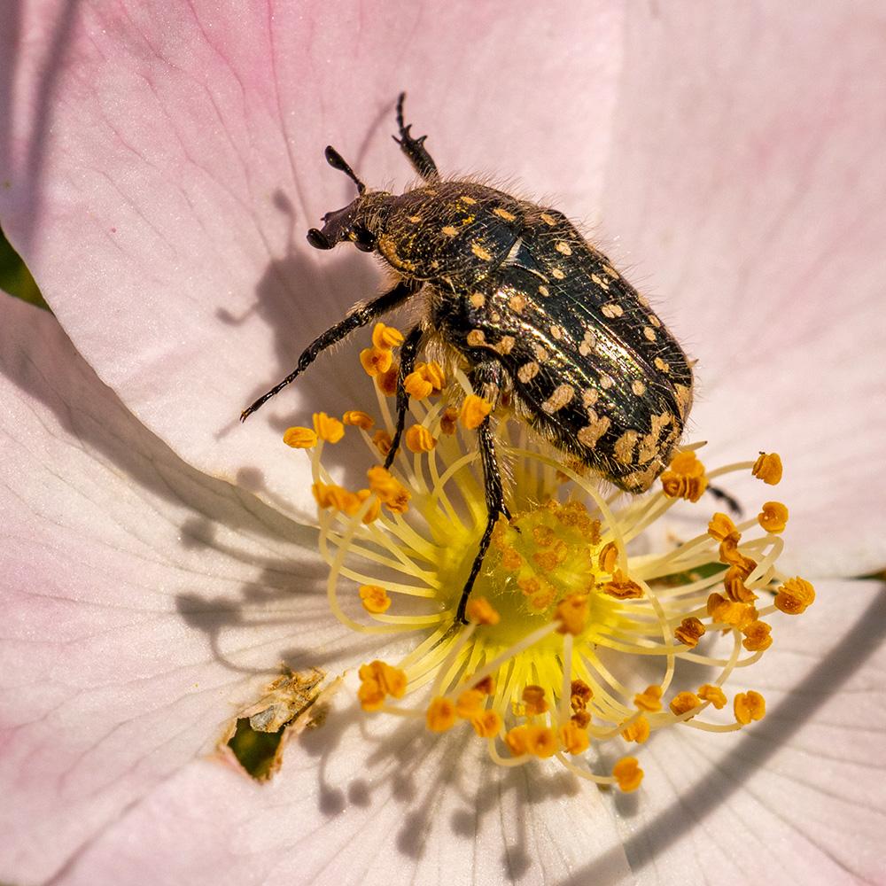 Macros/  proxi/  insectes  - Page 35 49923779487_8a46da92e7_o