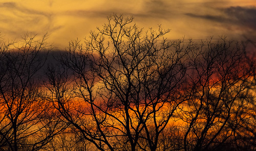 beasts in our time trees sunset clouds sky colorful shadows and light