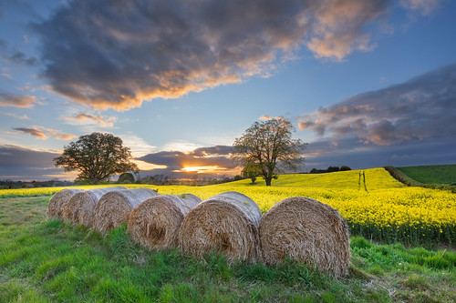 straw bales field arable tillage crop rotation yellow flowers blossom spring oilseedrape clare tandragee countyarmagh ulster northernireland farm farmer agriculture sunset evening alanhopps canon 5dmkiv landscape grower colours trees clouds cultivate breakcrop cropping goldensunset suninframe