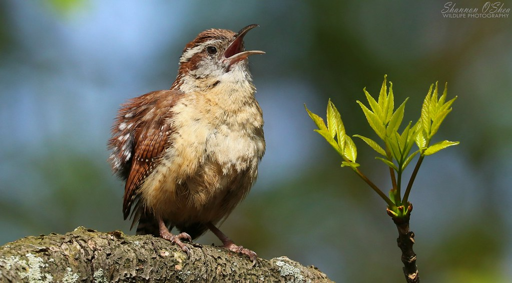 Joy is when a tiny bird sings a big, sweet song