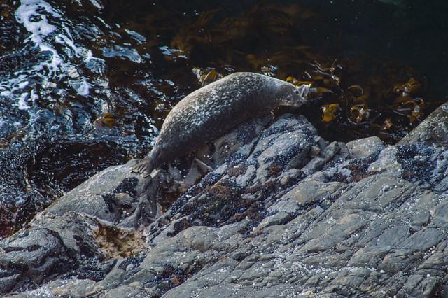 Seal (DSC_4957)