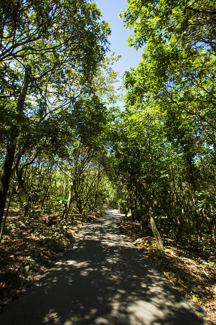 九九峰森林步道11