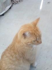 Tigger the Cat 11