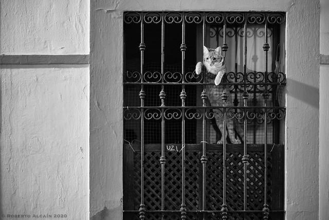 Cat peeking out the window