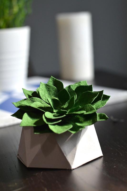 kraft-tex succulent 1