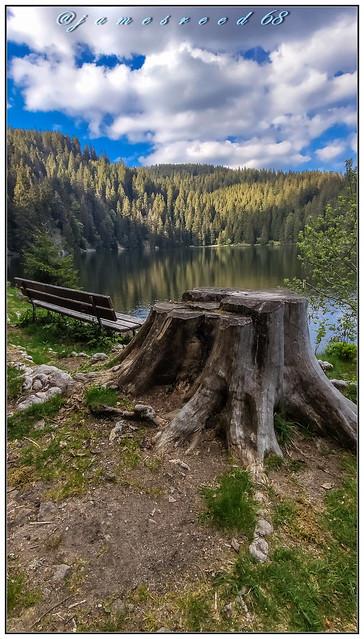 Lac Vert - Vosges / Alsace