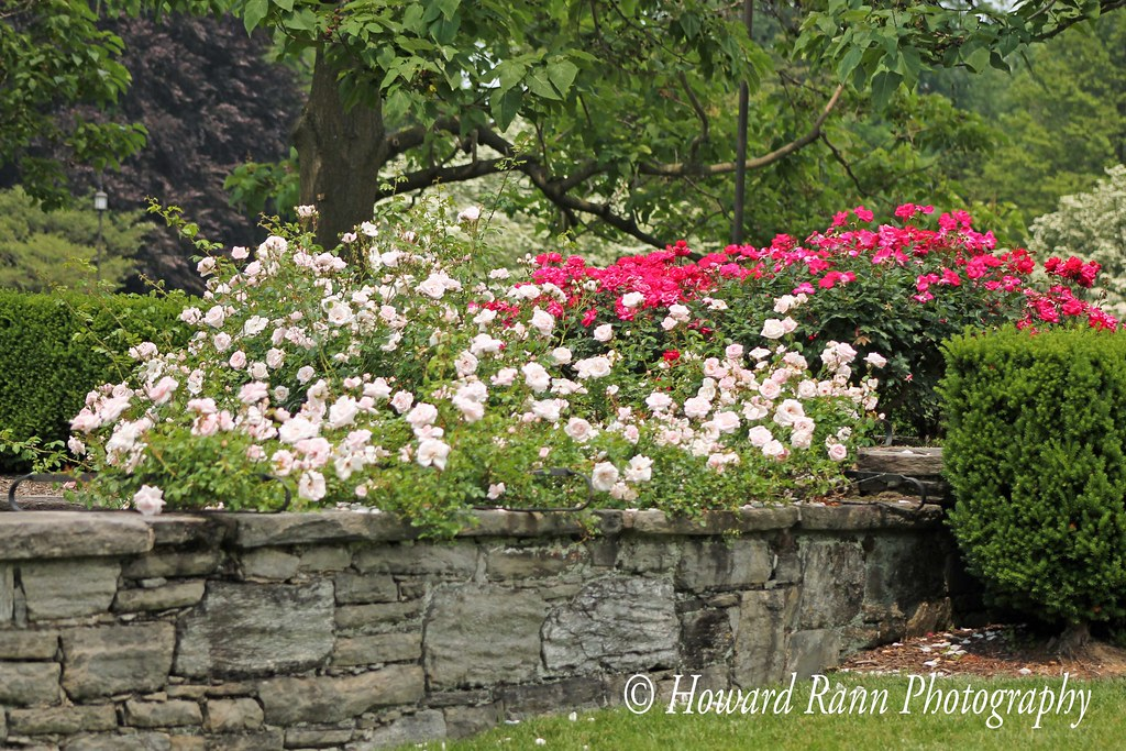 Longwood Gardens Spring 2019 (287)