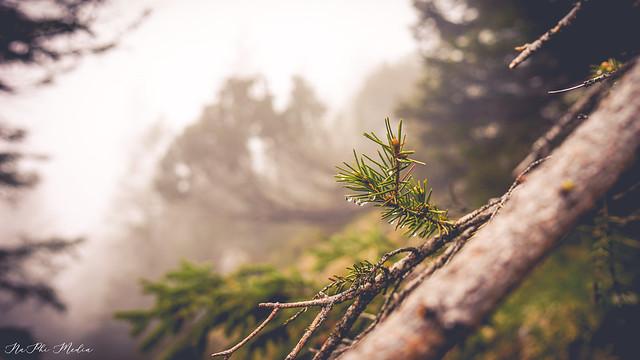 Rainy Simplicity
